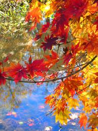 Autumn orange.jpg