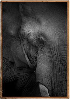 Elephant Tusker Art