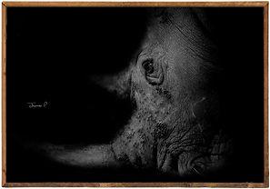 Art Rhino