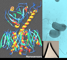 nanosensors.png