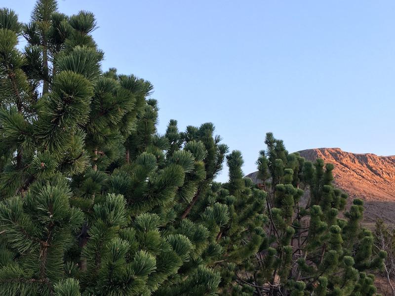 Ellen Wild, trees, forest, column, Iceland, úr vör, vefrit