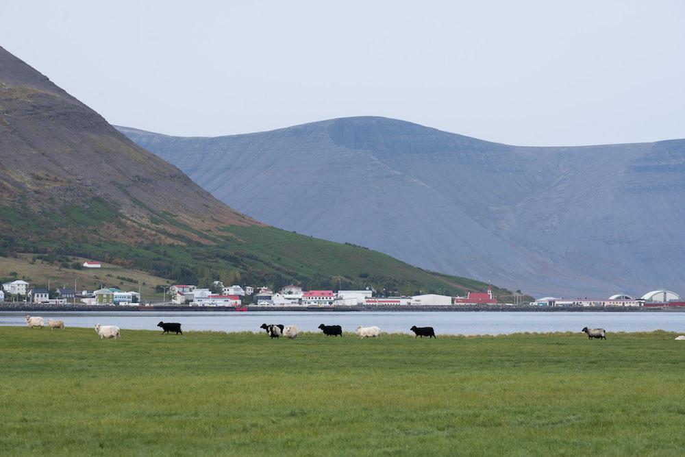 Nýsköpunarhemill, Startup Westfjords 2020, Blábankinn, Þingeyri, Dýrafjörður, frumkvöðlastarf, nýsköpun, landsbyggðin, Vestfirðir, Haukur Sigurðsson, úr vör, vefrit