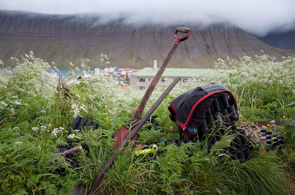 Gróandi, Ísafjörður, Vestfirðir, ræktun, grænmeti, félagslandbúnaður, landsbyggðin, úr vör, vefrit