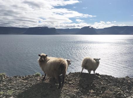 Að sjá fegurðina