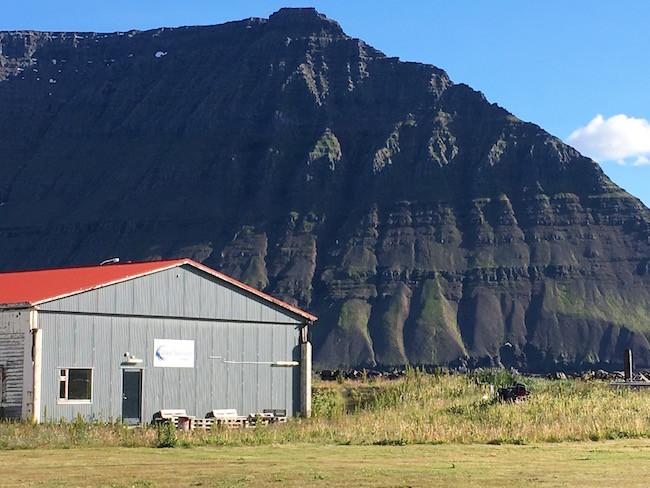 Flateyri, Önundarfjörður, kýrin Sæunn, sjósund, Vestfirðir, Bryndís Sigurðardóttir, Aron Ingi Guðmundsson, úr vör, vefrit
