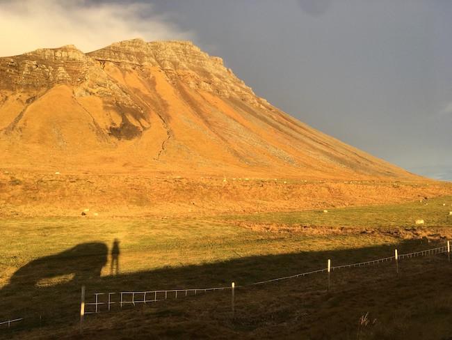 Herding sheep, Emanda Percival, sheep, herding, autumn, farm, farming, countryside, countryside living, pistill, úr vör, vefrit, Aron Ingi Guðmundsson