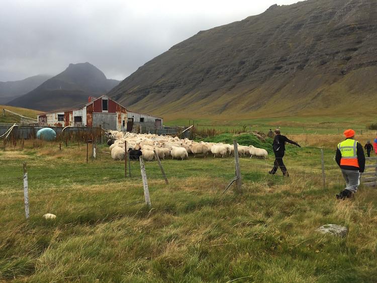 Arnhildur Lilý Karlsdóttir, pistill, Þingeyri, Vestfirðir, landsbyggðin, úr vör, vefrit