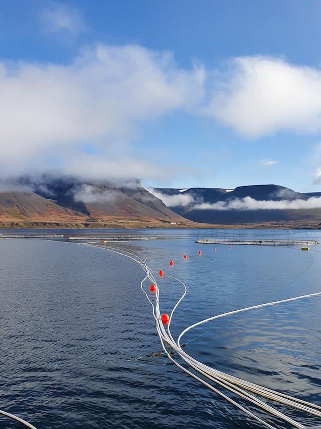 Dýrafjörður, Vestfirðir, fiskeldi, landsbyggðin, Guðrún Anna Finnbogadóttir, úr vör, vefrit