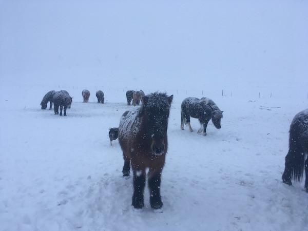 Ellen Wild, pistill, column, veðrið, weather, stormur, stom, Aron Ingi Guðmundsson, úr vör, vefrit