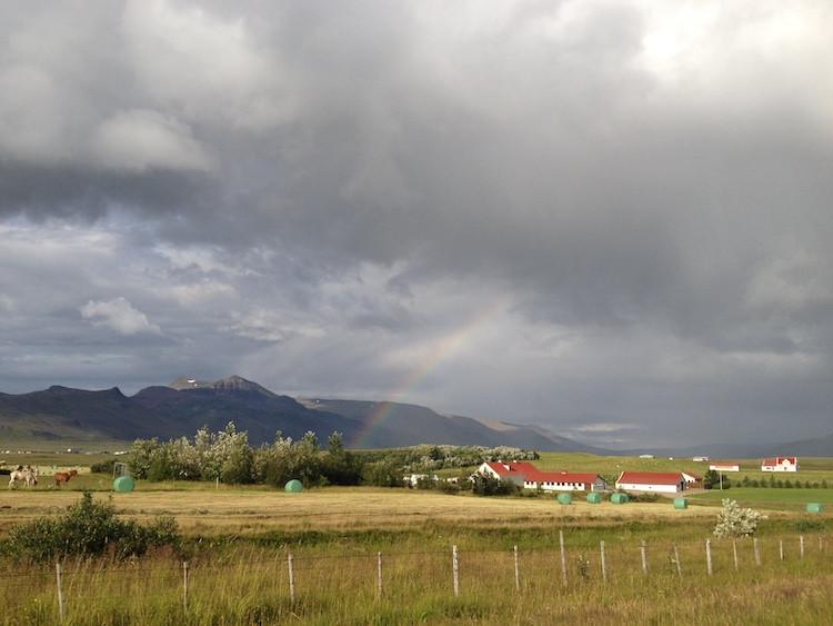 Emanda Percival, mjólk culture, milk, cow, farm, milk farming, farming, countryside, Ísland, Iceland, úr vör, vefrit, Aron Ingi Guðmundsson