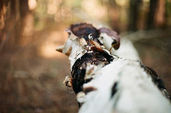 Alter by Mikaela Rackham