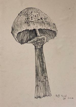 Shaggy Parasol by DigsArt