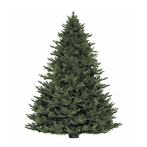 Lost Creek Tree (Delivery on Dec 5th)