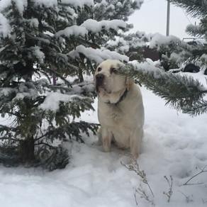 Собаки тоже резвились в пушистом снегу