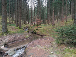 Ferienwohnung Dreiländerheck Eifel Natur