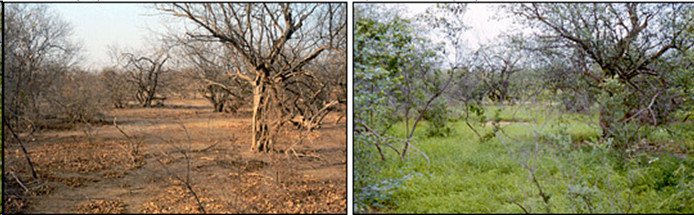 Vegetation index change detection as a Sign of desertification in Africa form Sep 1982 (in right) to Mar 1984 (in left): NASA Earth Observatory