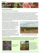 Newsletter image 2019-03 Grapes