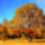 tree-99852_1920.jpg