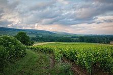 vineyard-6399505_1920.jpg