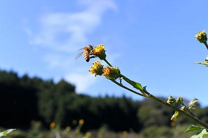 ミツバチ01.jpg