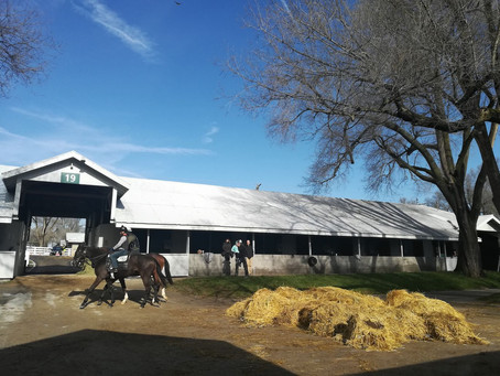 Incredible journey to the horse capital of the World-Lexington!