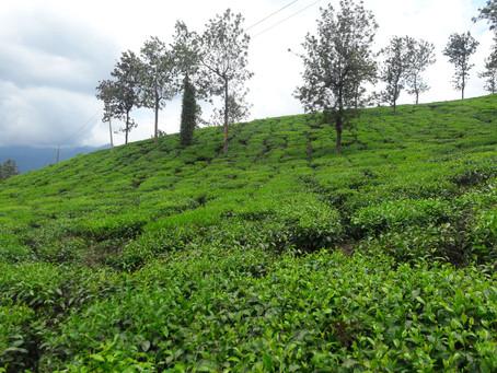 Wayanad-The tale of Western Ghats!