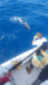 Yellowfin Tuna Miss Guided Fishing Charters