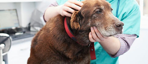 senior-labrador-with-vet4-1024x319.jpg
