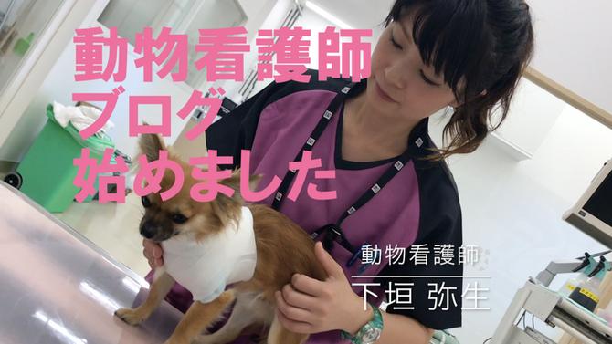 動物看護師ブログ 始めました!