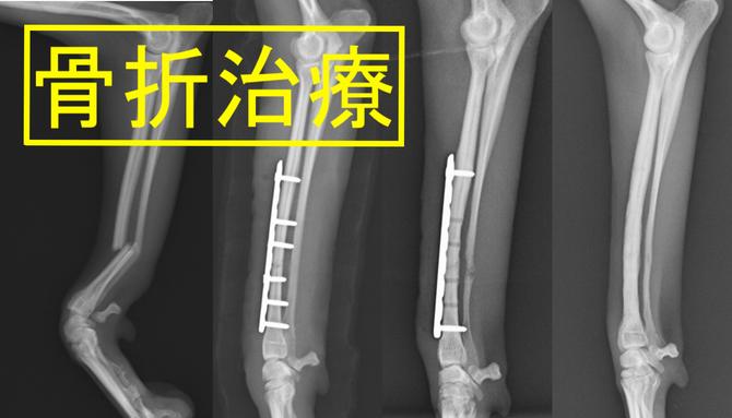 子犬の骨折
