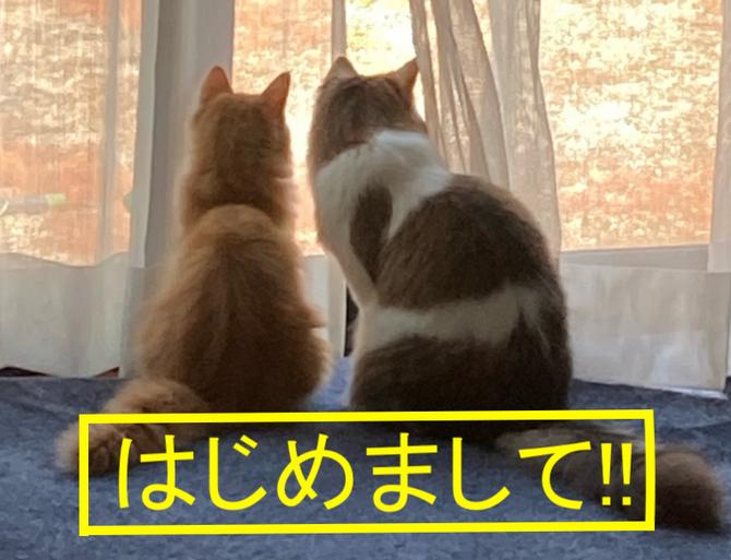新入社員紹介!!