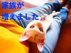 写真④のコピー.JPG
