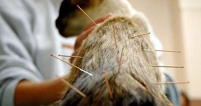 Acupuntura-para-perros-y-gatos-2.jpg