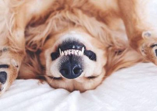 dog-teeth-smile-e1536153208694.jpg