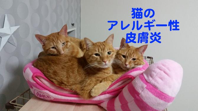 猫のアレルギー性皮膚炎