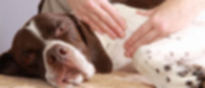 Canine-Massage-IN-3-EASY-STEPS_3-1.jpg