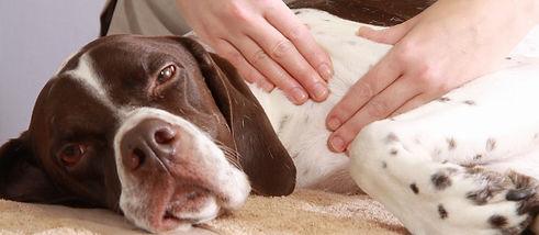 Canine-Massage-IN-3-EASY-STEPS_3-1.jpg
