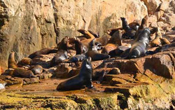 Sea lions Colony at Los Cabos