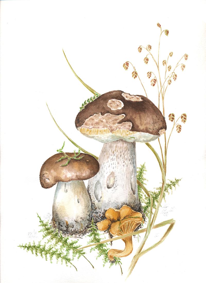 сентябрьские грибы