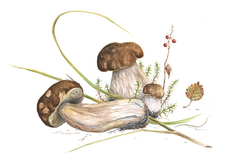 августовские грибы