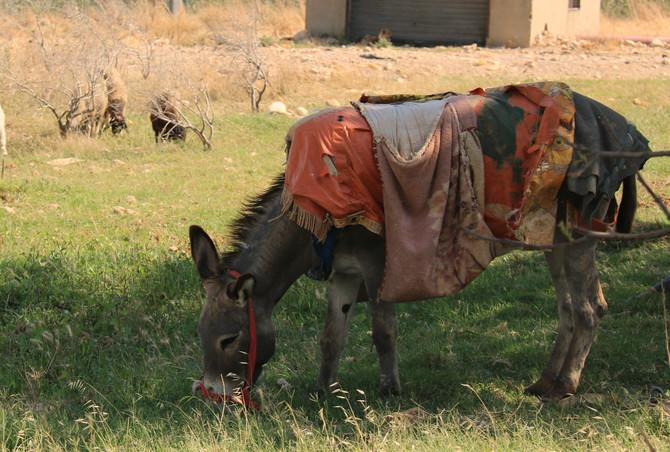 Donkeydiction