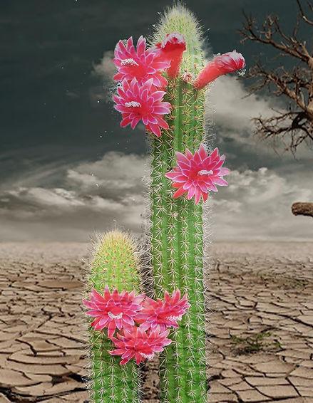 kaktus_wüste_Schmerz_Hoffnung_praxis_ri