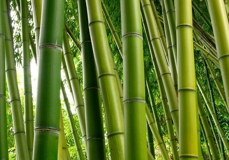 bambuswald_haaranlayse_praxis_richter_mÃ