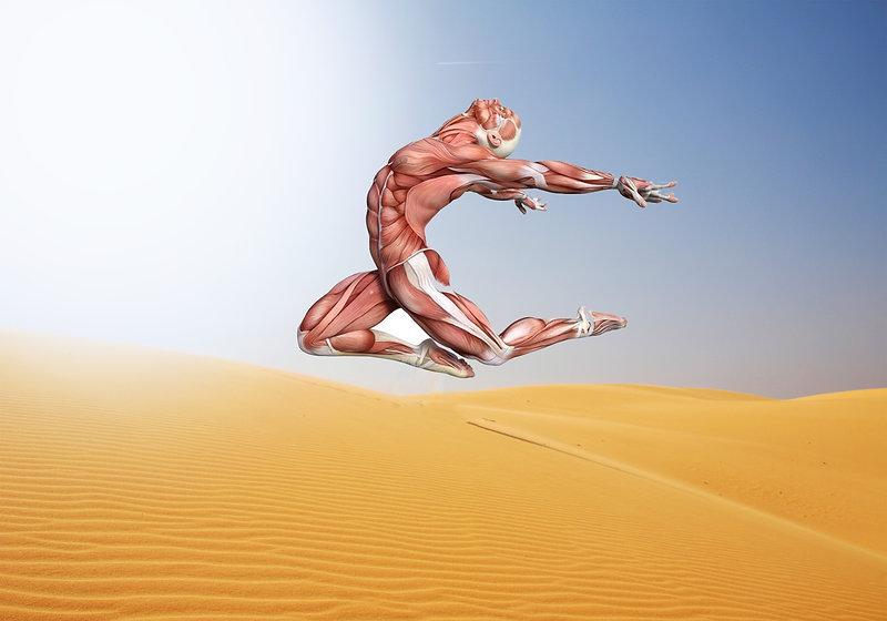 Magnesium Muskel.jpg
