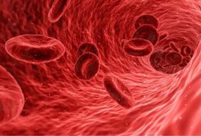 Blutdiagnose Labor Richter Heilpraktiker in Münster
