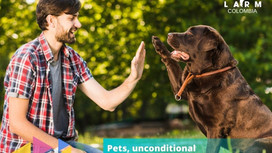 Pets, unconditional company: Curiosities and Tips.
