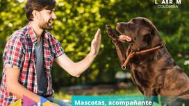 Mascotas, acompañante incondicional: Curiosidades y Tips.