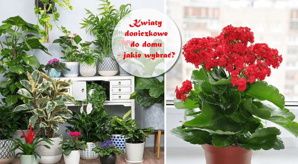 Kwiaty Doniczkowe Do Domu Jakie Warto Mieć A Których Unikać