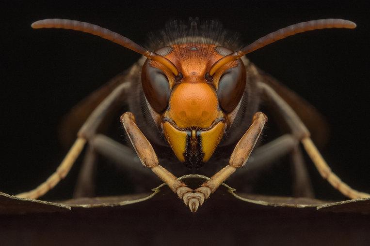 hornet stitch.jpg