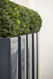 Buxus balls in a row of tall grey powder-coated tapered planters